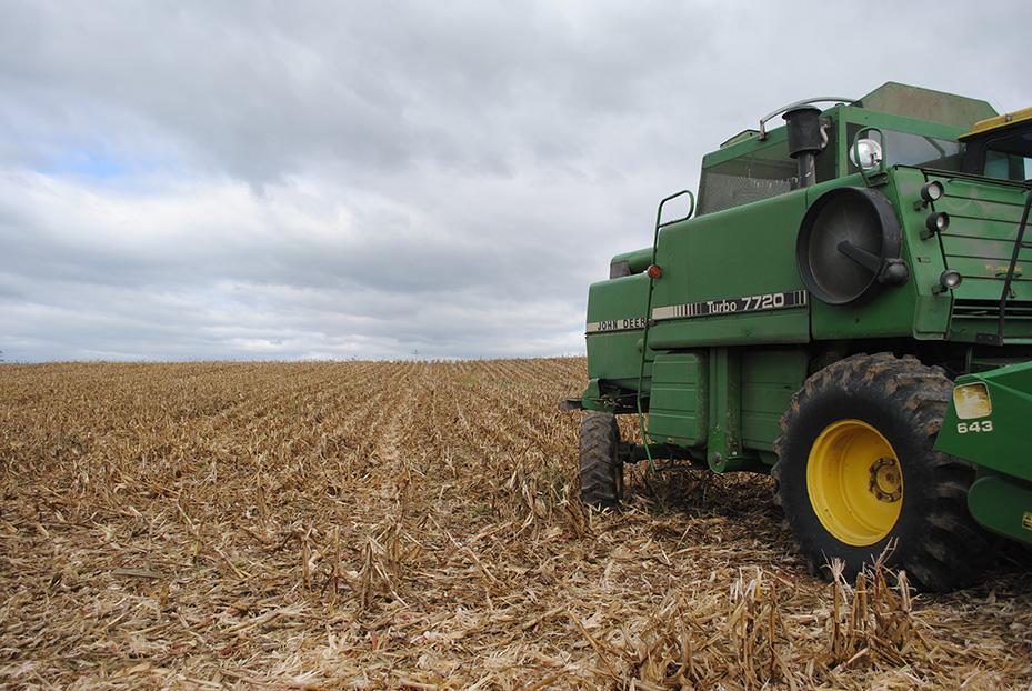 corn_harvest1