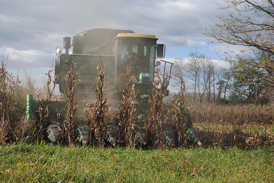 corn_harvest8